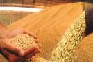 Neri Geller lança safra de grãos em Sorriso