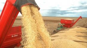 Estiagem afeta produção agrícola paulista, afirma IEA