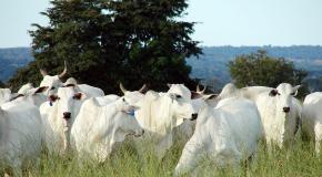Brasil poderá exportar mais de 100 mil toneladas de carne aos EUA