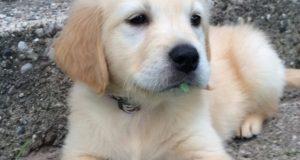 cachoro2