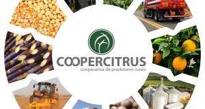 Coopercitrus1