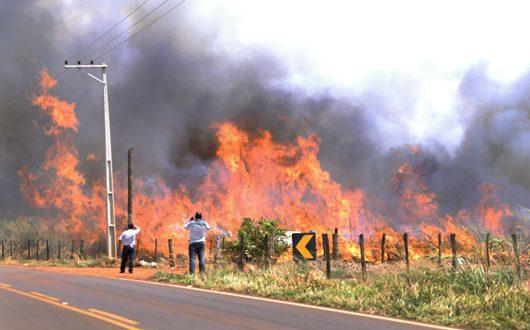 queimadas3