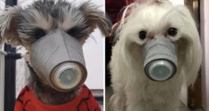 CachorroVirus