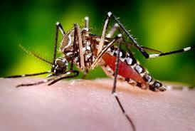 Dengue20